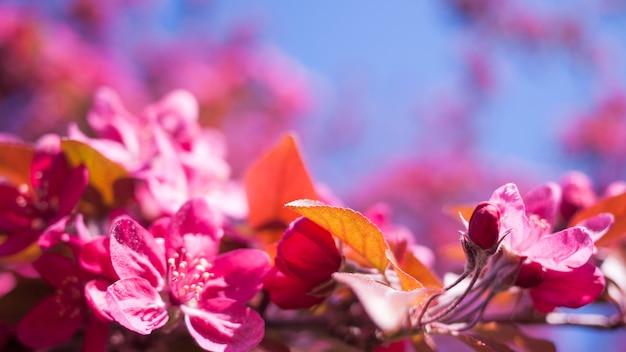 Frühlingsnaturhintergrund mit blütenbaum