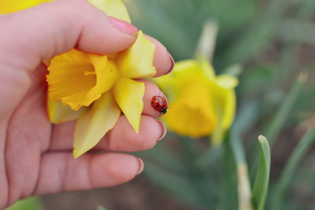 Frühlingsnaturhintergrund. narzisse