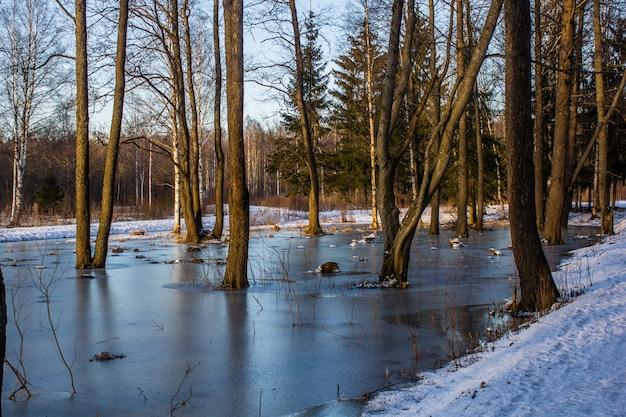 Frühlingsparklandschaft mit schnee. der beginn des frühlings. märz landschaft