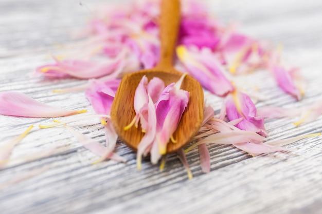 Frühlingspfingstrosenblüte auf hölzernem löffel