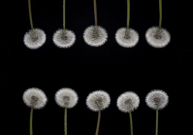 Frühlingsrahmen blumenrahmen lokalisiert auf schwarzem hintergrund