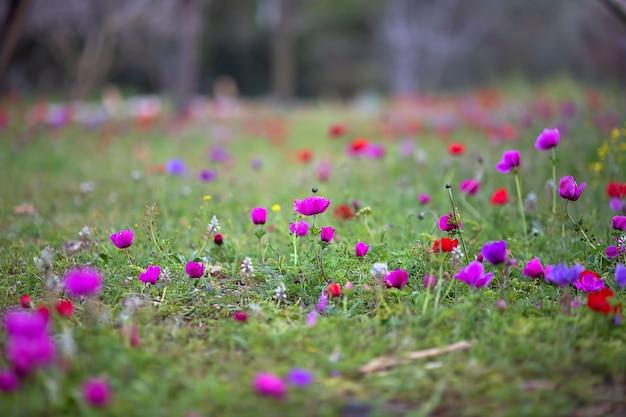 Frühlingsrasen, auf dem bunte blüten wachsen
