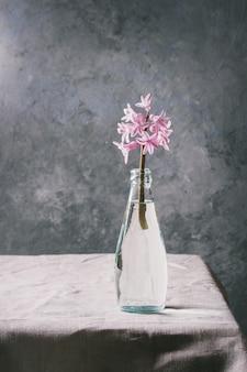 Frühlingsrosa hyazinthe