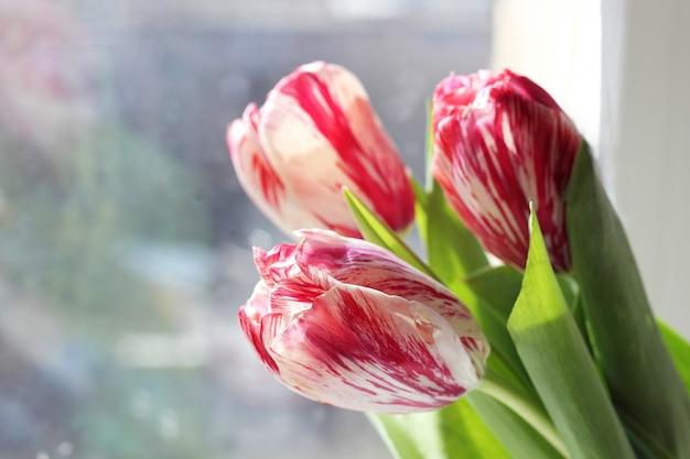 Frühlingsstrauß aus rosa und weißen tulpen