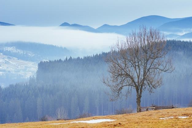 Frühlingstag in den bergen der ukraine.