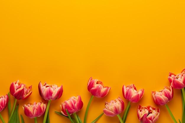 Frühlingstulpen auf gelben farben.