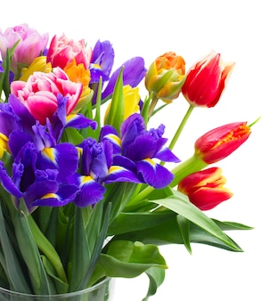 Frühlingstulpen und iris lokalisiert auf weiß