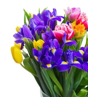 Frühlingstulpen und iris schließen oben isoliert auf weiß