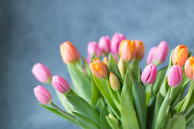 Frühlingstulpenblumen auf grauer wand. grußkarte. speicherplatz kopieren. freiraum. postkarte.