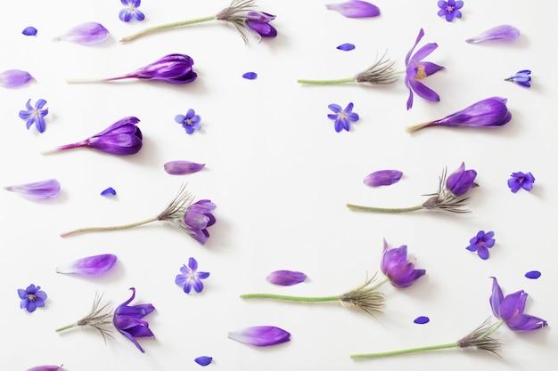 Frühlingsviolette blumen auf einem weißen raum