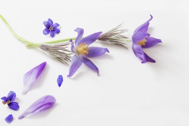 Frühlingsviolette blumen auf einem weißen tisch