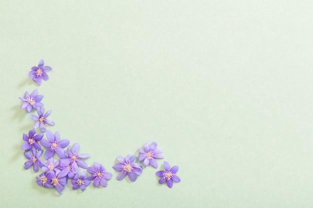 Frühlingsviolette blumen auf grünem hintergrund