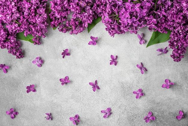 Frühlingsviolette lila blumen auf grauem beton