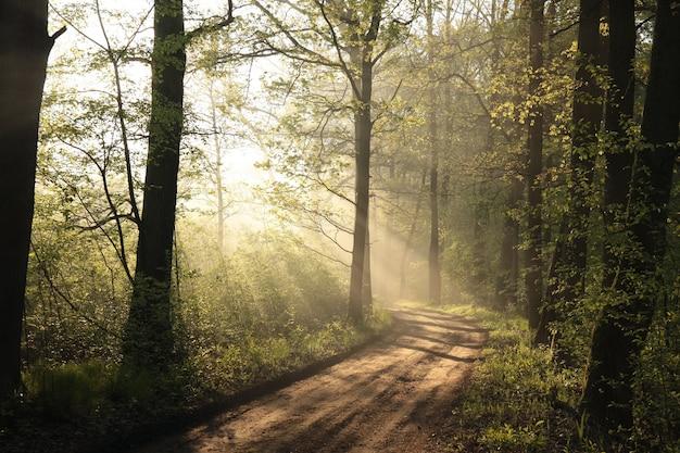 Frühlingswald an einem nebligen morgen