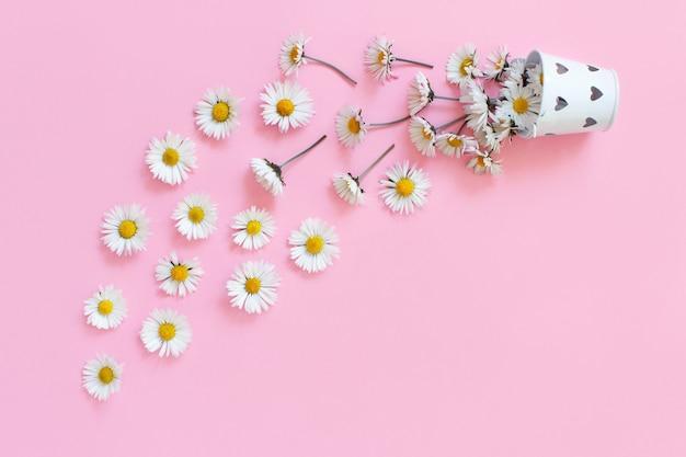 Frühlingszusammensetzung mit weißen gänseblümchen, die von einem eimer auf einem hellrosa hintergrund fallen