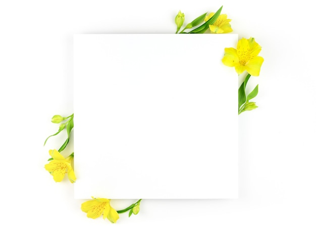 Frühlingszusammensetzung. weiße blumen, weißer papierhintergrund. flache lage, draufsicht, kopierraum, modell.