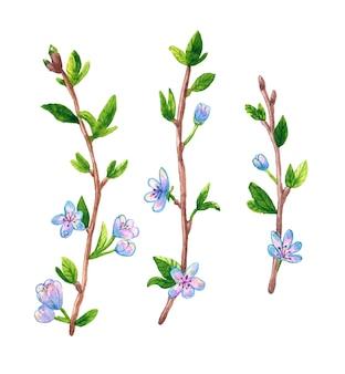 Frühlingszweige mit blumen im aquarellstil