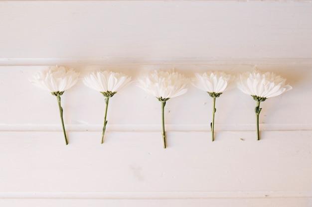 Fünf gänseblümchen auf einer reihe über einem weißen holztisch