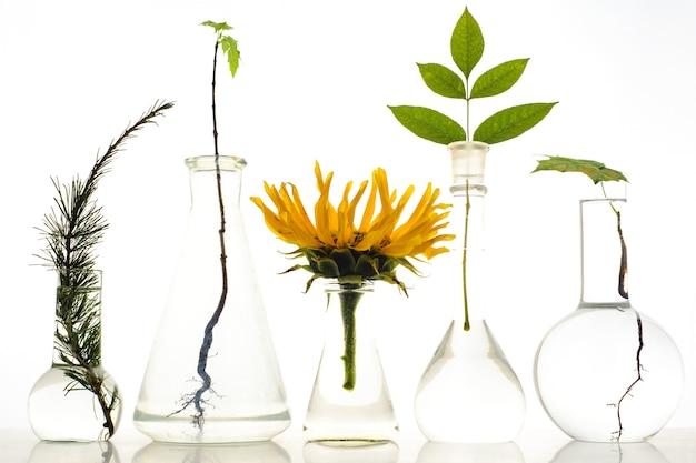 Fünf laborkolben mit pflanzen auf weißem hintergrund