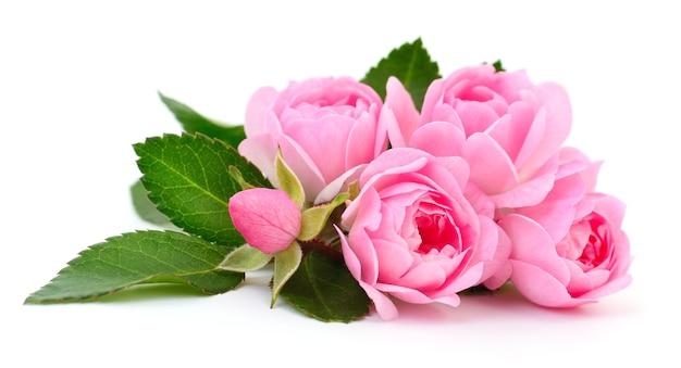 Fünf schöne rosa rosen auf weißem hintergrund.