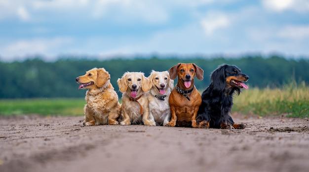 Fünf süße kleine hunde posieren auf naturhintergrund. unscharfer hintergrund. haustiere und tiere.