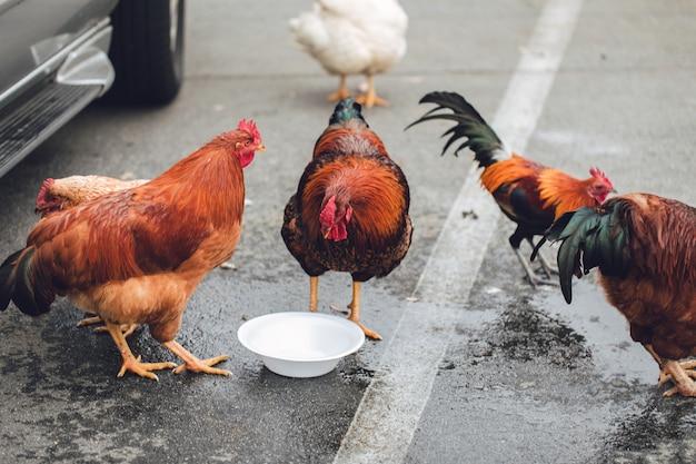 Fünf verschiedenfarbige hühner