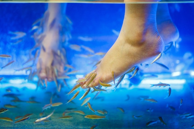 Füße in fish spa pediküre rufa garra behandlung
