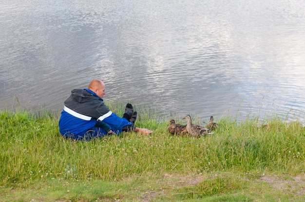 Fütterungsenten des mannes in einem teich. retter füttert enten, hungrige enten haben angst, sich von den händen zu ernähren.