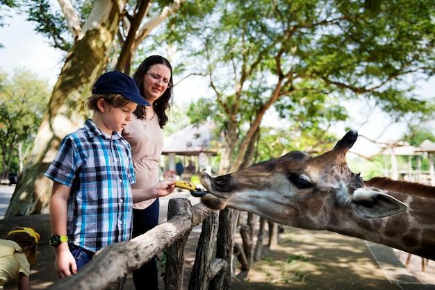 Fütterungsgiraffe des jungen jungen am zoo