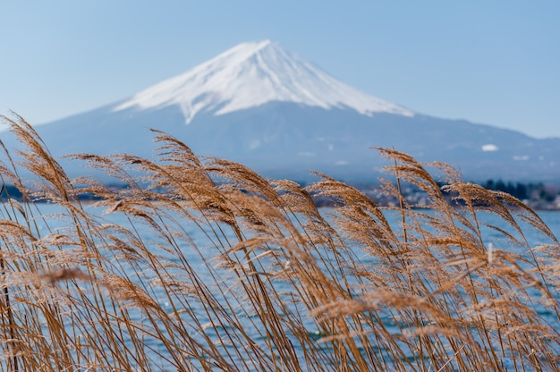 Fuji mount mit blütenblick