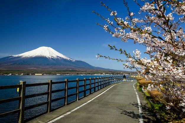 Fuji und sakura im frühling im yamanakako-see