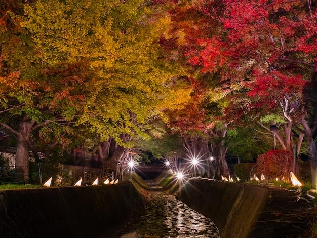 Fujikawaguchiko autumn leaves momiji festival
