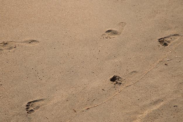 Fußabdruck des vaters und des kindes auf dem strandhintergrund
