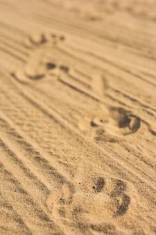 Fußabdrücke eines hundes und eines autos auf dem sand.