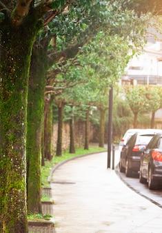 Fußgängerweg leeren. alte bäume mit moos und flechten neben bürgersteig und straße. autos parken am straßenrand. alte bäume an der kurvenstraße. fußgängerweg leeren. keine leute auf dem bürgersteig.