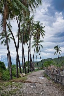 Fußweg an einem tropischen strand mit palmen, tropischem wald und zaunzweigen am strand