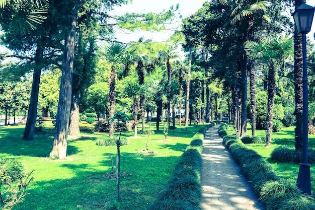 Fußweg durch grünen park in batumi, georgia. getöntes foto