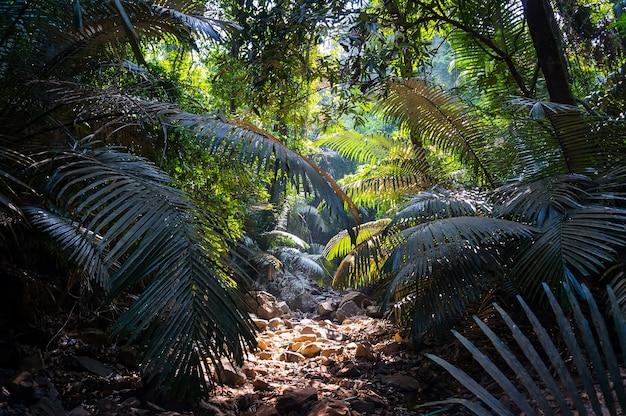 Fußweg im dschungel mit sonnenlicht durch üppiges laub, natürliche szene. goa