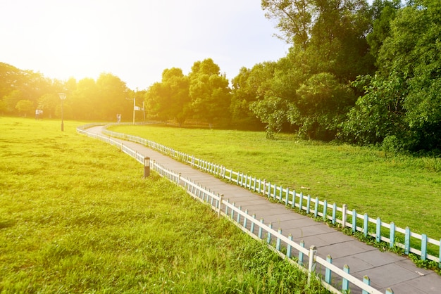 Fußweg in der wiese