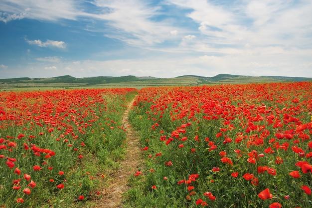 Fußweg zum berg und zur wiese der mohnblumen.