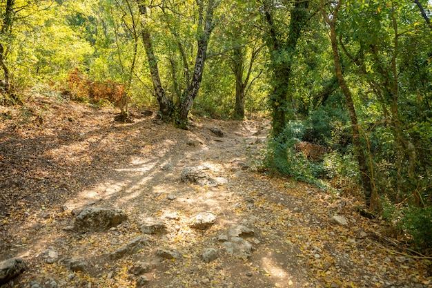 Fußweg zwischen bäumen und ruinen der antiken stadt termessos ohne touristen in der nähe von antalya in der türkei