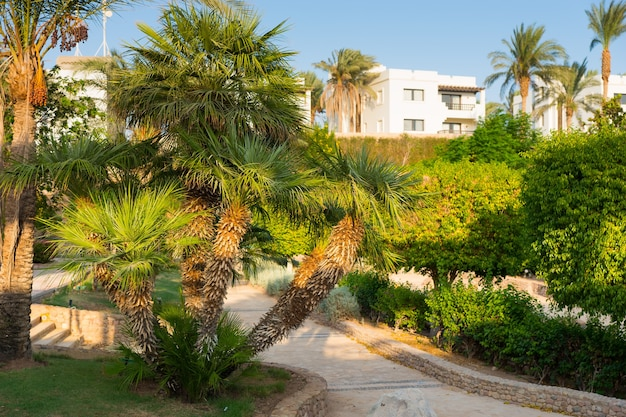 Fußweg zwischen palmen und anderen bäumen, sträuchern und pflanzen im garten des hotels an einem sommertag