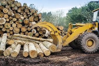 Gabelstapler ergreift Holz in einer Holzverarbeitungsanlage