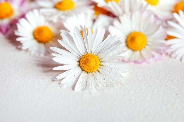 Gänseblümchen blüht weinlesefarbart für naturhintergrund