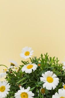 Gänseblümchen bouquet