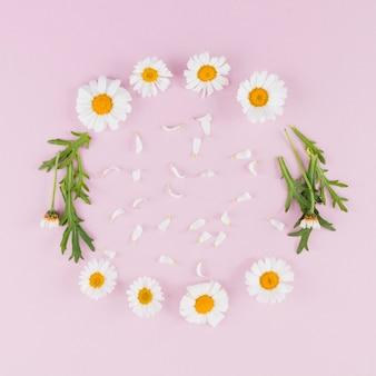 Gänseblümchen der draufsicht kreisten rahmen ein