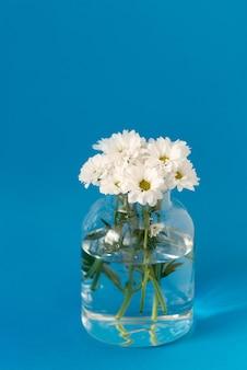 Gänseblümchen in vase auf blauem hintergrund isoliert. frühlingsblumen hintergrund