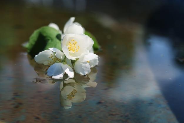 Gänseblümchen- und jasminstrauch im sommer