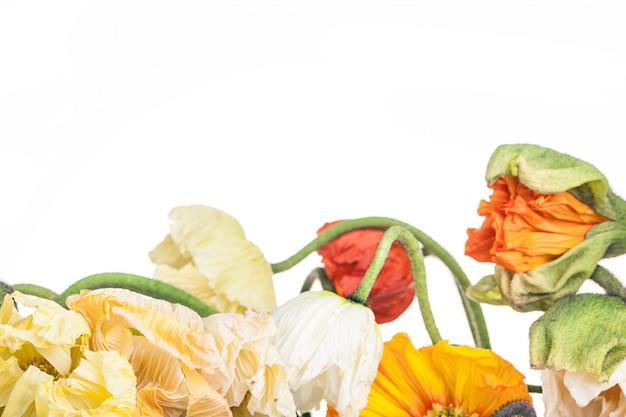 Gänseblümchen- und mohnblumenstrauß