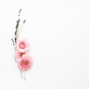 Gänseblümchen und wilde blumen